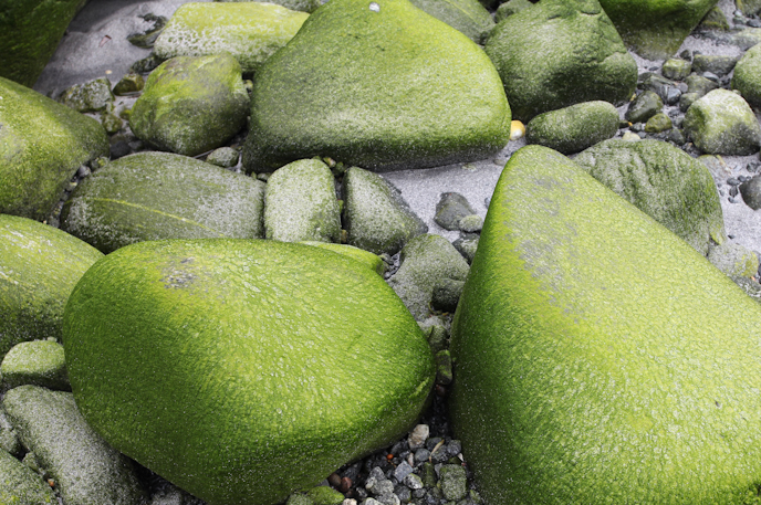 Green rocks on the beach near Ålesund, Norway